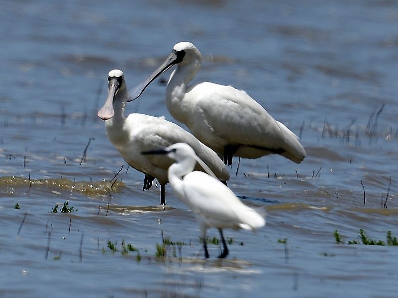 新竹市金城湖是賞鳥的好所在